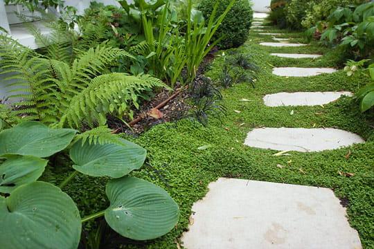 Un jardin d 39 ombre for Plantes ombre exterieur nord