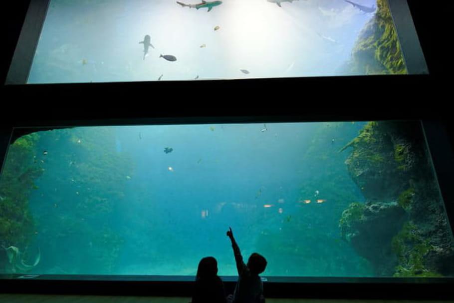 Découvrez les fonds marins à l'aquarium de Lyon!