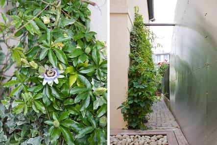 "Le petit ""jardin blanc"""