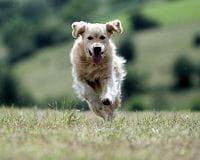 chien saut