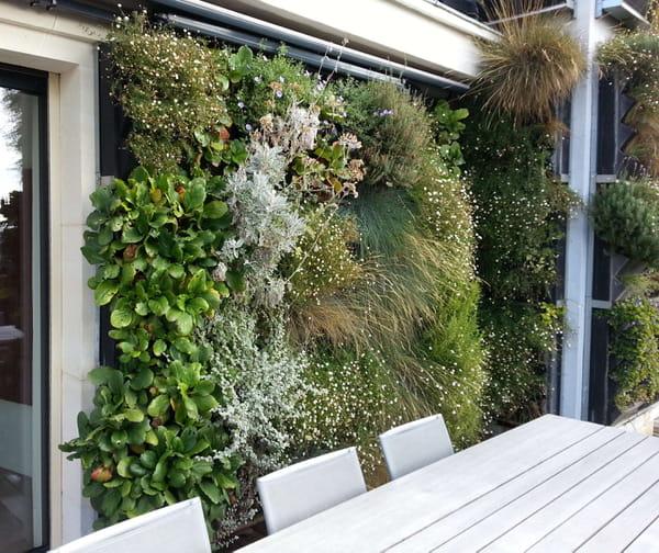 mur-vegetalise