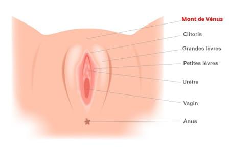 Mont de vénus pubis femme