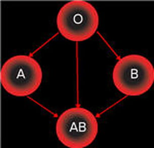 schéma des groupes donneurs et receveurs.