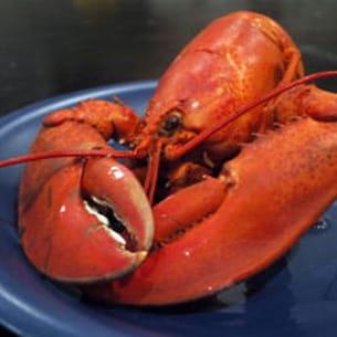 homard à montréal