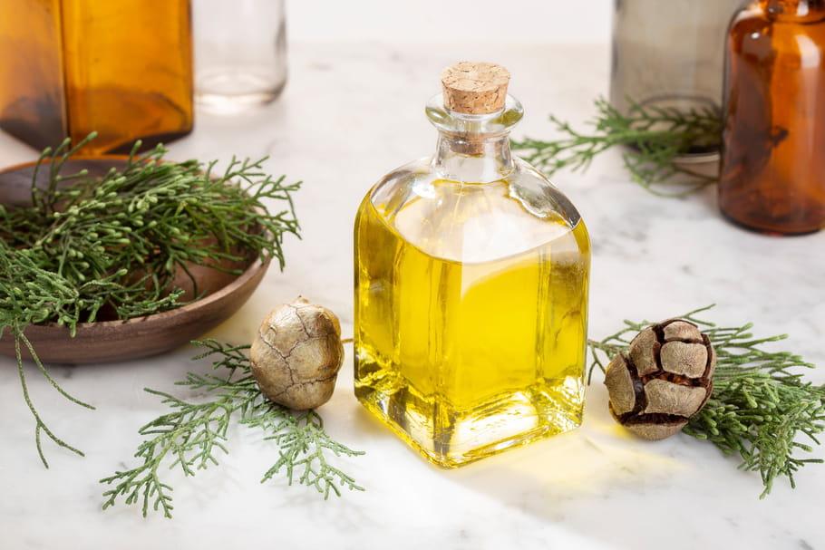 Cyprès: propriétés, bienfaits de la plante médicinale