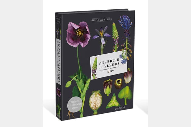Herbier des fleurs sauvages de nos régions de Pierre et Délia Vignes