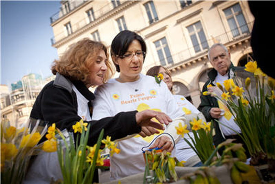 """""""Une jonquille pour Curie"""": faire fleurir l'espoir contre le cancer"""