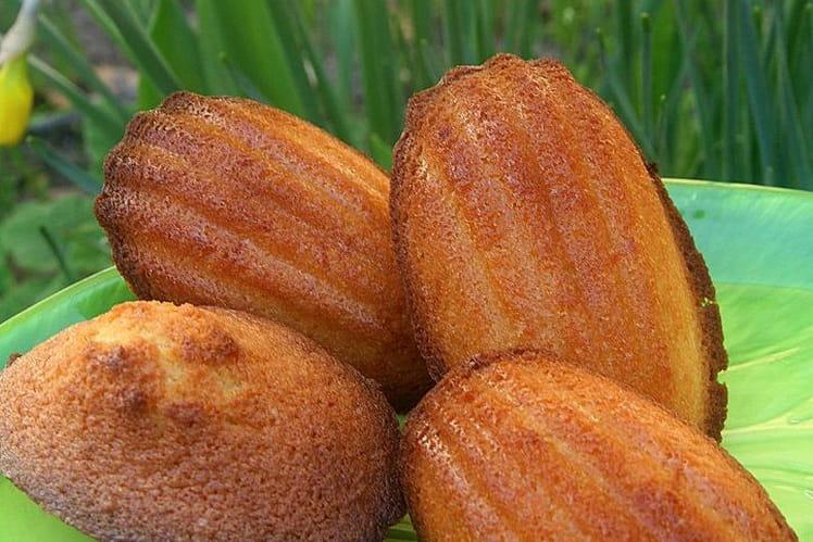 Madeleines aux zestes d'orange