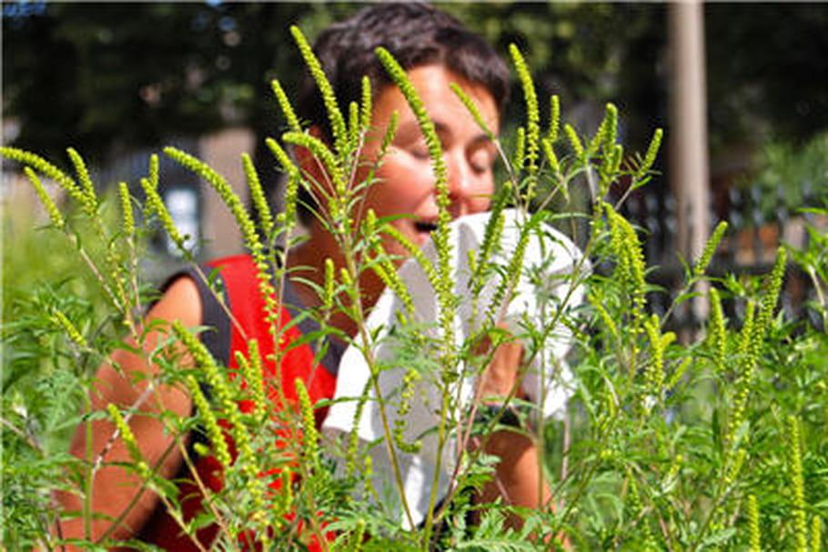 Pollens: la pollution atmosphérique favorise les réactions allergiques