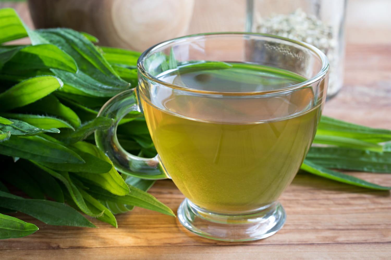 Plantain Lancéolé: vertus (asthme...), utilisation, tisane