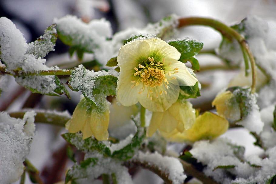 Fleurs De Saison Quelles Varietes En Hiver