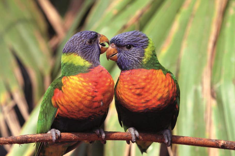Le Parc des oiseaux: prenez votre envol!