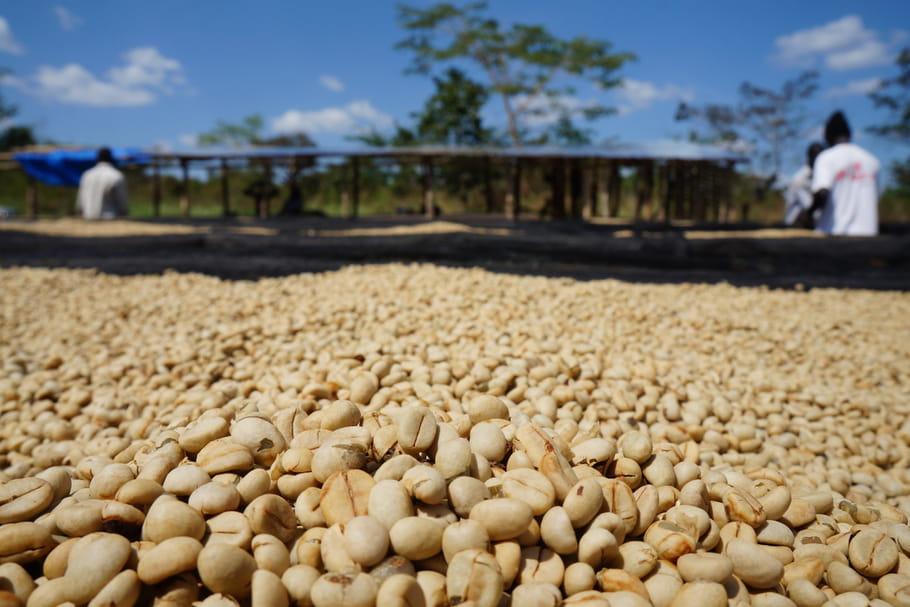 Secret de café n°3: Du grain de café vert à la tasse