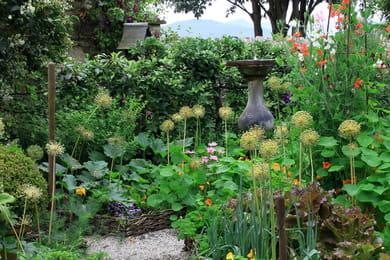 Quand tailler la lavande - Il faut cultiver notre jardin signification ...
