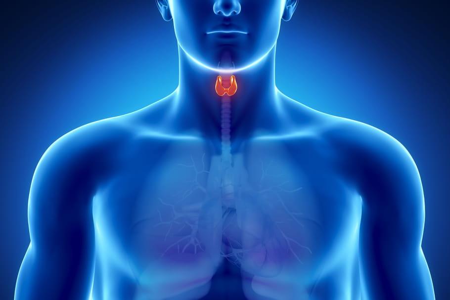 Le cancer de la thyroïde est en hausse