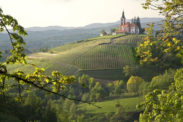 Les vignes de Vivodina