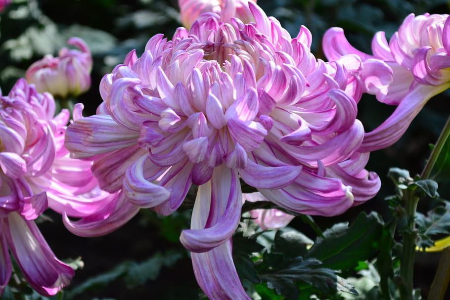 Floraison en septembre