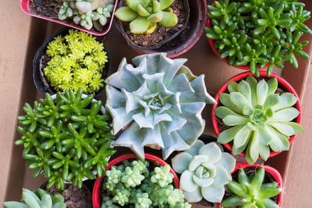Plante verte d 39 int rieur ou d 39 exterieur conseils et for Plantes vertes exterieur