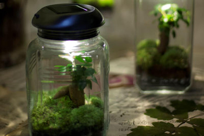 L'objet du désir : Treeki, l'objet vivant lumineux