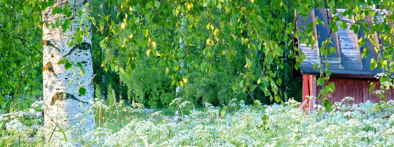 Jardin conseil pour le jardinage l 39 am nagement et la d coration du jardin - Quand planter un cerisier ...