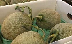 melon 250