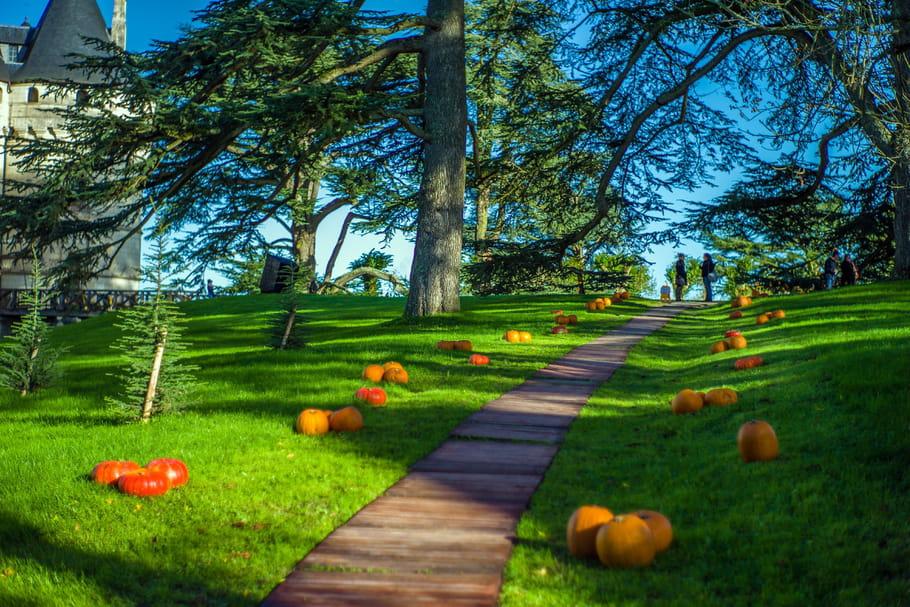 Splendeurs d'automne au Domaine de Chaumont, c'est parti!