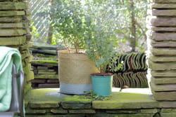Quel arbre original planter dans le jardin - Planter un eucalyptus dans son jardin ...