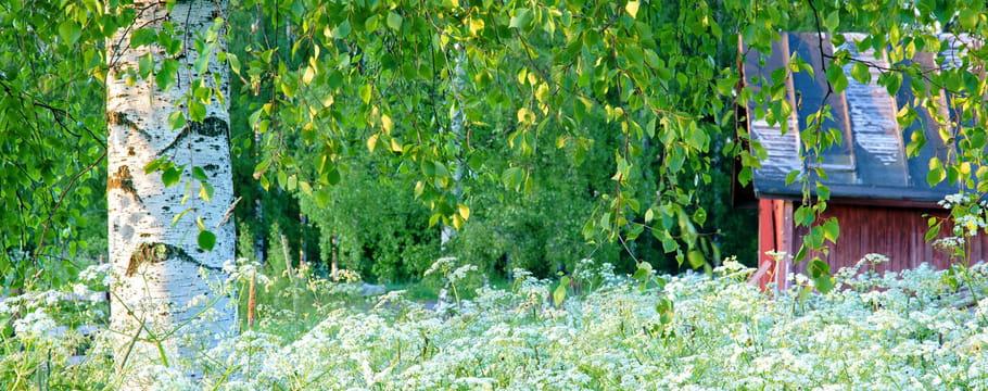 arbre informations conseils et entretiens des arbres et arbustes avec le journal des femmes. Black Bedroom Furniture Sets. Home Design Ideas