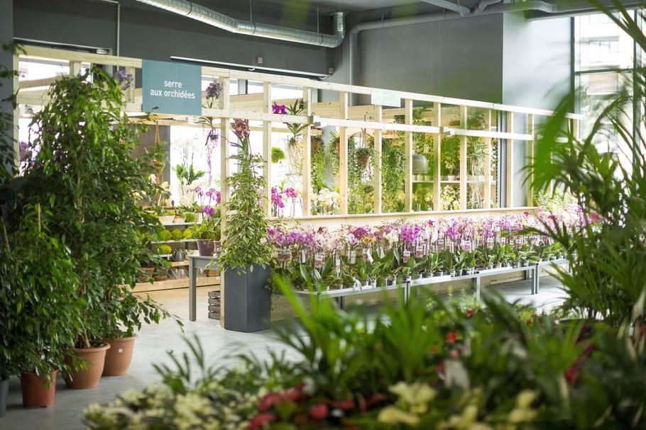 Botanic ouvre un magasin 100 % bio près de Paris