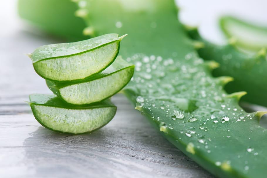 Aloe vera : tout savoir sur ses bienfaits et ses utilisations