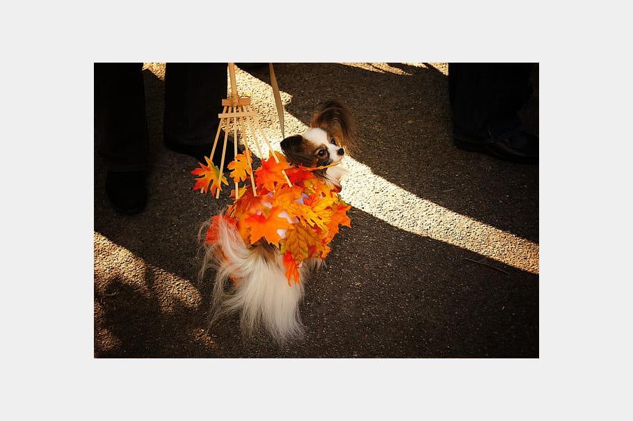 un costume de saison les plus beaux chiens d guis s de la halloween dog parade 2011 journal. Black Bedroom Furniture Sets. Home Design Ideas