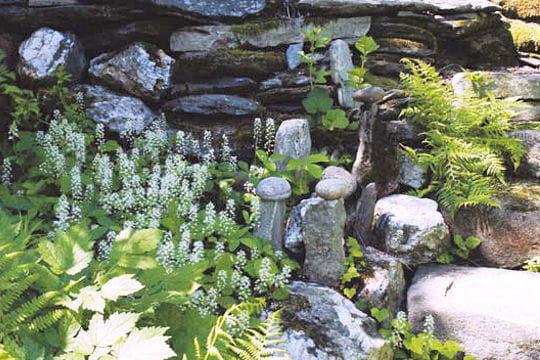 Les plantes de sous bois # Plantes De Sous Bois Liste