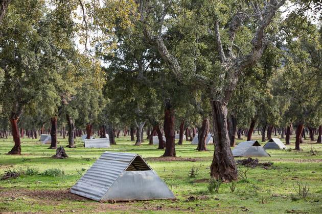 Des tentes portatives
