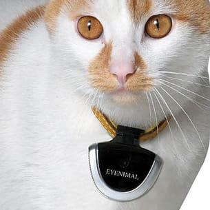 la caméra eyenimal s'accroche au collier de l'animal.