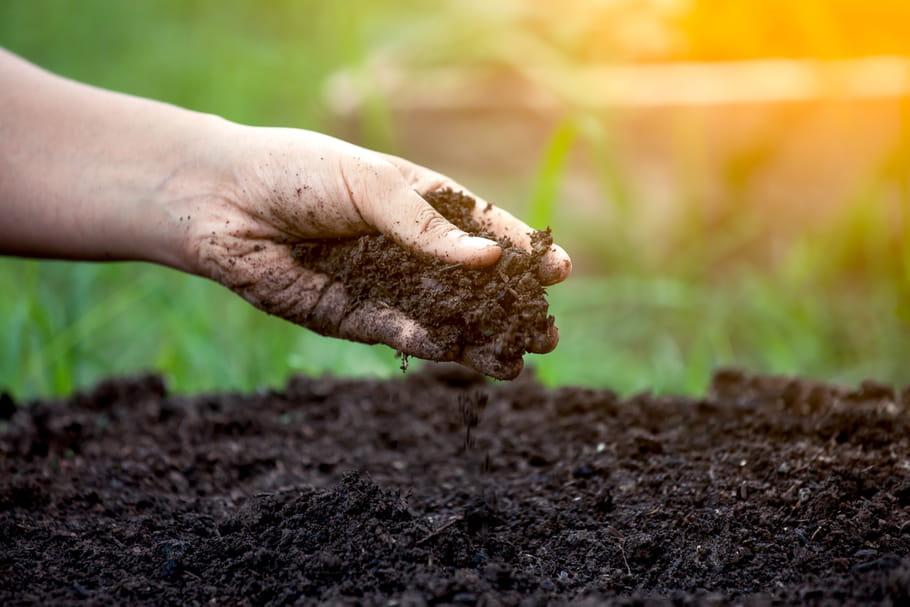 Terreau: lequel choisir en fonction de ses plantes?