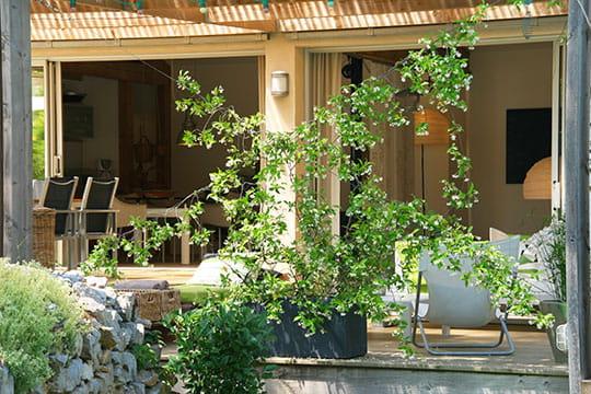 Derrière un rideau de jasmins