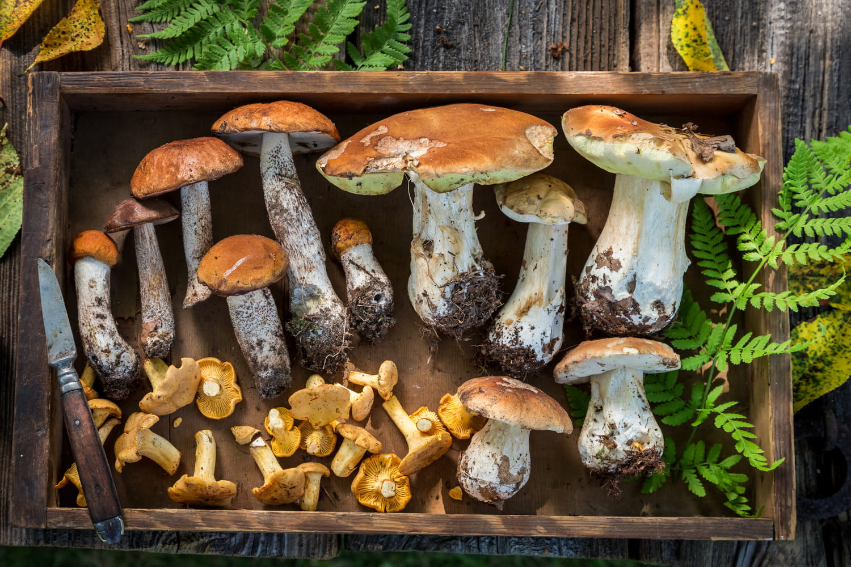 Connaître et reconnaître les champignons