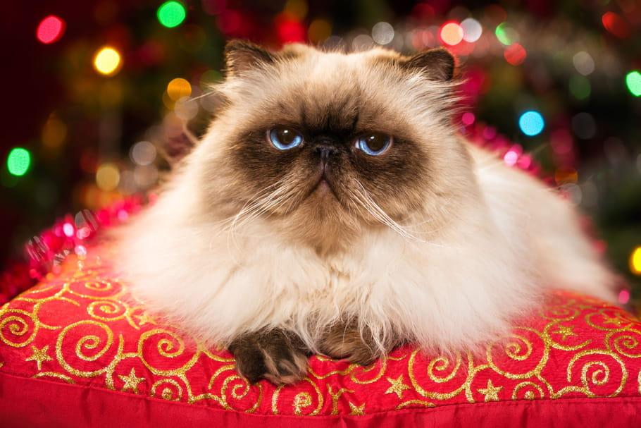 10bonnes raisons de détester Noël