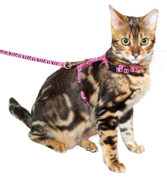 Les meilleurs harnais pour promener votre chat