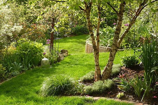 Un tronc plusieurs arbres - Le jardin des grandes vignes ...