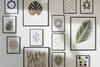 Botanique, herbiers et fleurs séchées: la tendance fraîche