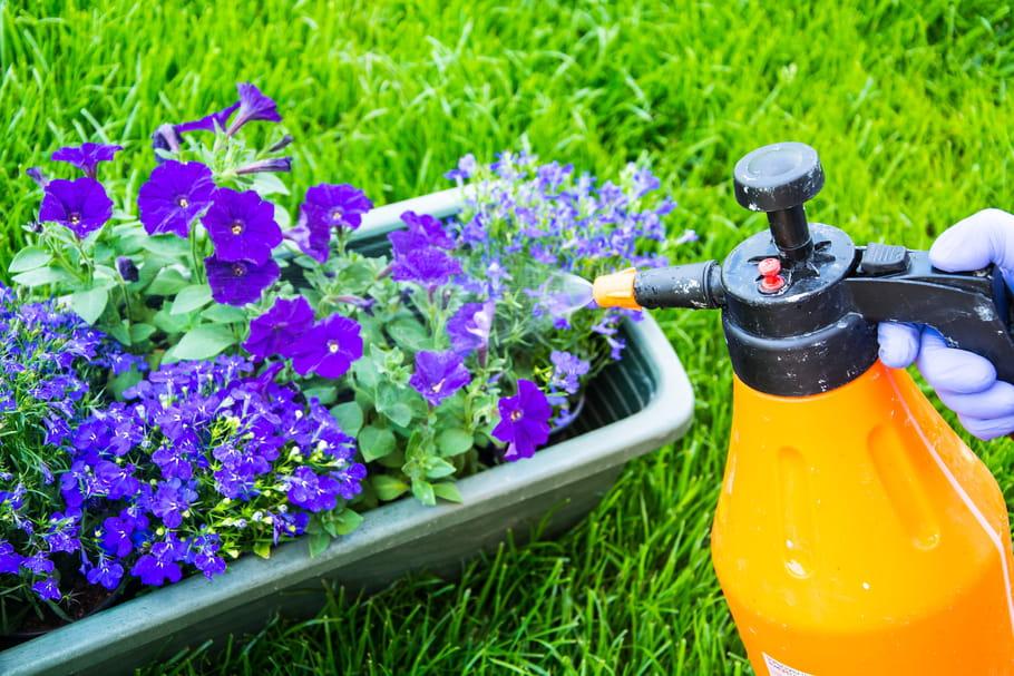 Pesticides interdits: quelles sont les alternatives?