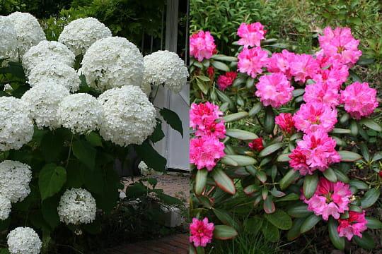 De belles fleurs en boules