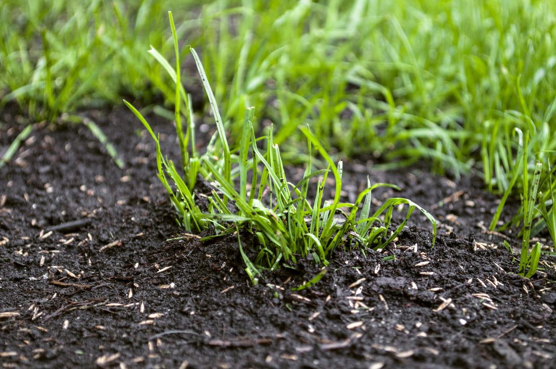 Quelles Fleurs Planter Fin Aout semer du gazon : quand et comment ? les astuces pour réussir