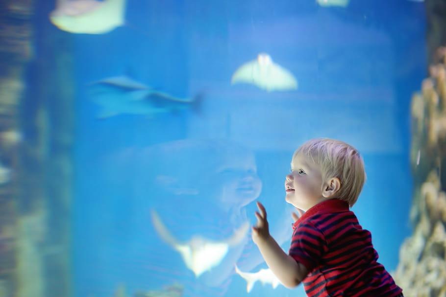 L'aquarium de Lyon: entre espèces locales, requins et poissons tropicaux