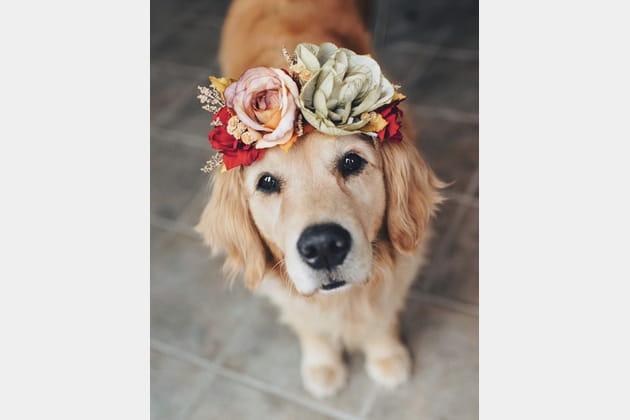 Les animaux de compagnie s'invitent au mariage
