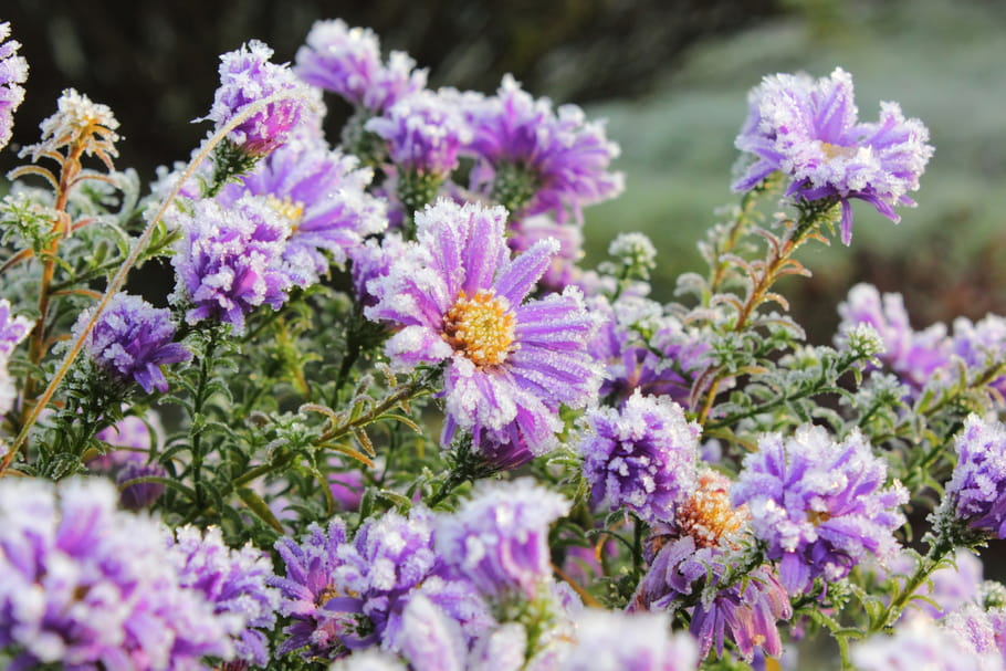 Qu'est-ce qu'une plante rustique? Définition et liste des variétés