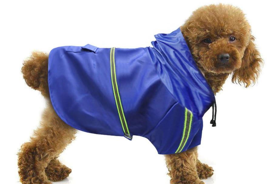 Meilleurs manteaux pour chiens: tendances et confortables