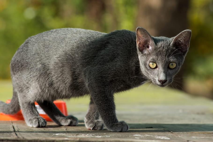 chats en direct datant Pourquoi Carbon-14 n'est pas utilisé pour la datation des os de dinosaures