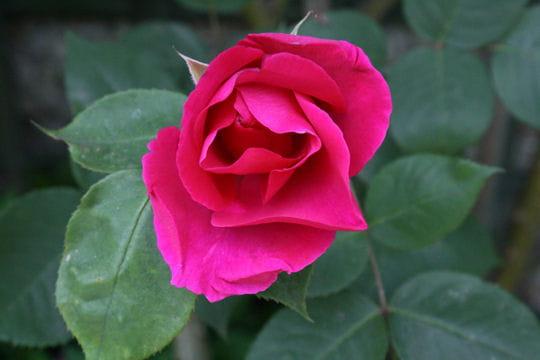 Floralies de Valencienne ®